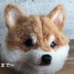 羊毛フェルトで作るリアル 柴犬の作り方