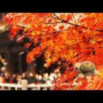 秋の京都 with みらくるカメたん