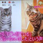 めざましテレビ「キラビト」猫専門!羊毛フェルト作家 横山まゆみ