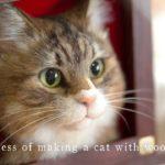 羊毛フェルトで猫を作る制作過程4 A process of making a cat with wool felt.
